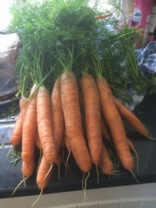 Carrots-Brandreth-Barn