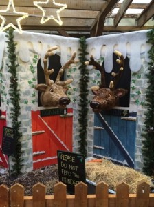 reindeer-brandreth-barn